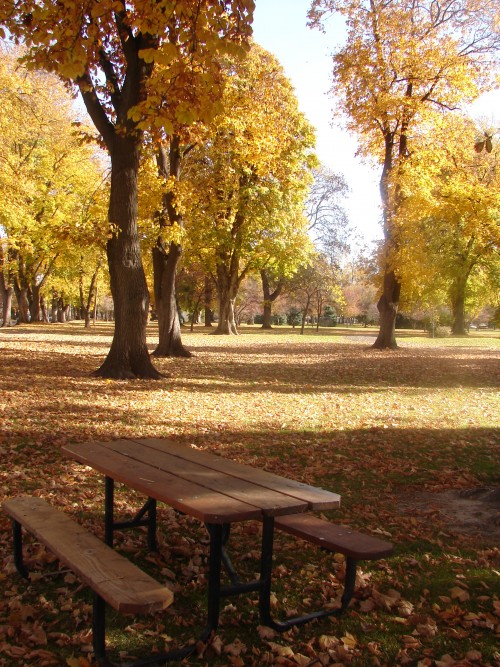 park in autumn