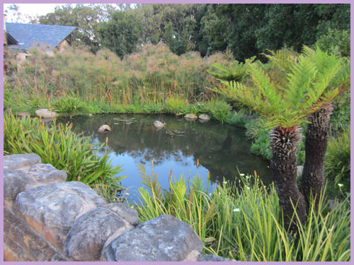 World Heritage Sites in South Africa: Kirstenbosch gardens