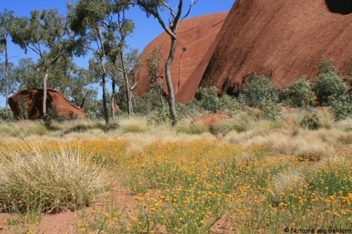 World Travel Dreams: Australia's Red Centre and Wildflowers