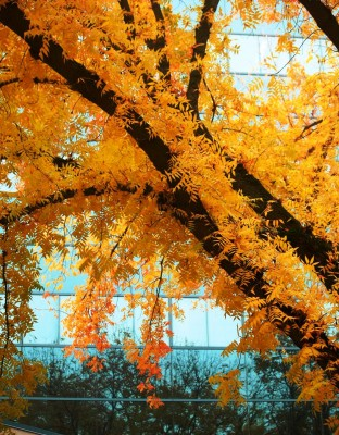 Fall in Northern California orange and yellow explosion by Remy Gervais