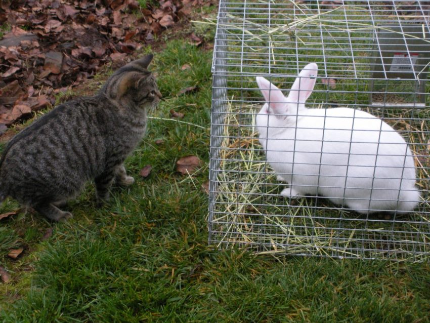 Kitty and Bunny know that Living the American Dream Sometimes Requires a Leap of Faith