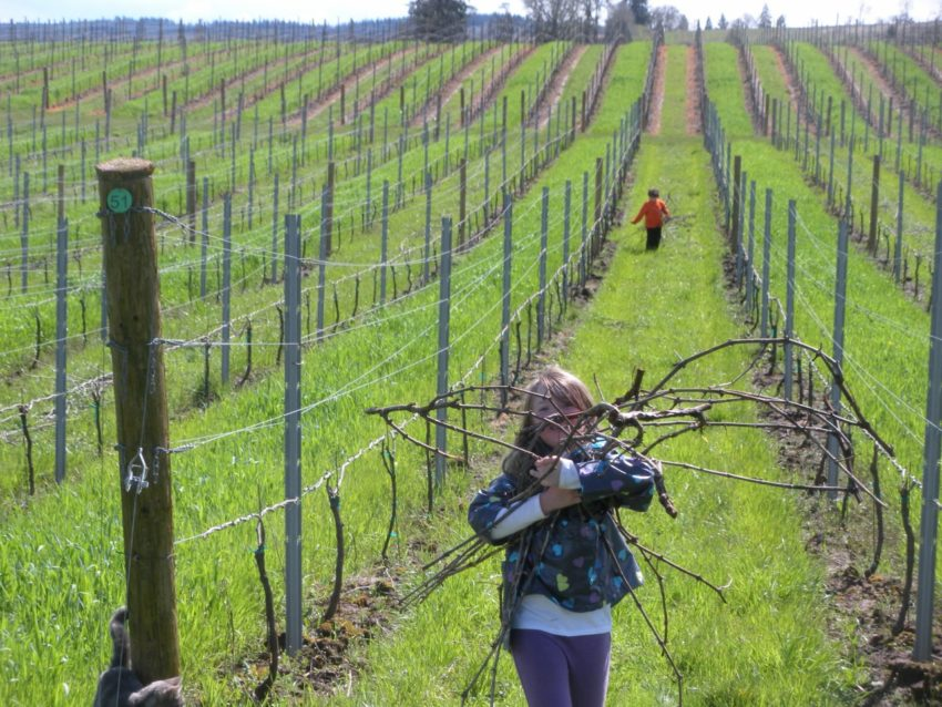Dream Spring Living: Kids collecting vine cuttings