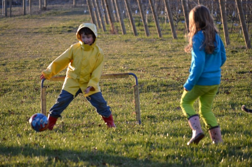Pruning a Vineyard is Like Raising Children - Recess at our home