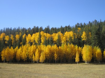 8 Best Places to See in the Fall - Fall in Flagstaff Arizona by Katie Eigel