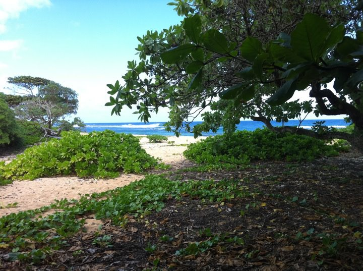 Writing From Paradise: How to Work From Anywhere