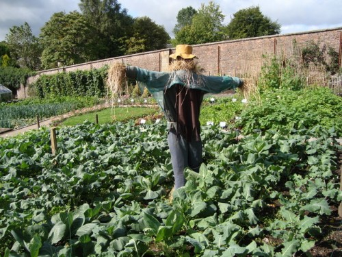 A Recipe for Healthy Boundaries: A Scarecrow in the vegetable garden - By David McMumm