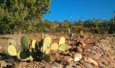 Wine Travel: Arizona Wine Country