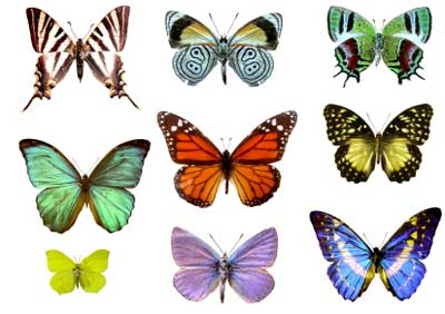 How Storytelling Can Change Lives: Part III - Becoming the butterfly