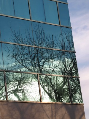 Wordless Wednesday Images of Winter in Northern California:Winter Reflections photo by Remy Gervais