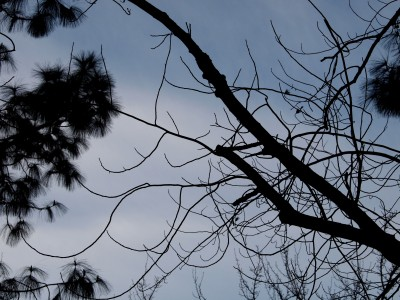 Wordless Wednesday Images of Winter in Northern California:Winter Limbs photo by remy Gervais