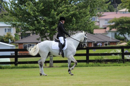 Top 8 Equestrian Blogs and Horse Websites - Equestrian rider
