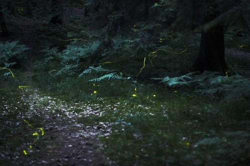 How Storytelling Can Change Lives: Fireflies in the forest