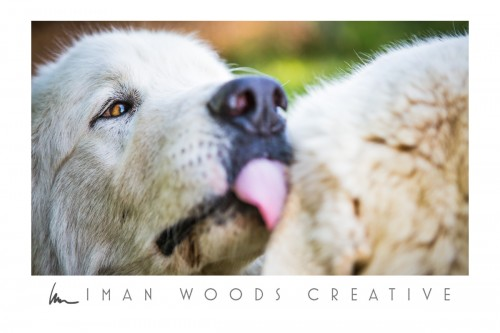How to Heal with Photography: Dogs on a working farm
