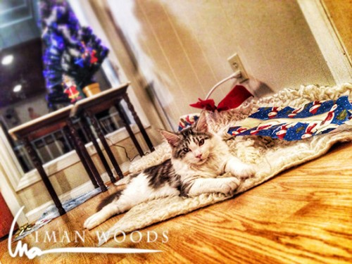 The spoils. Odin (a five month old Maine Coon) has had fun playing in the wrapping paper.