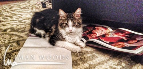 Freya (also a five month old Maine Coon) steals a book. Don't worry, I took it away.