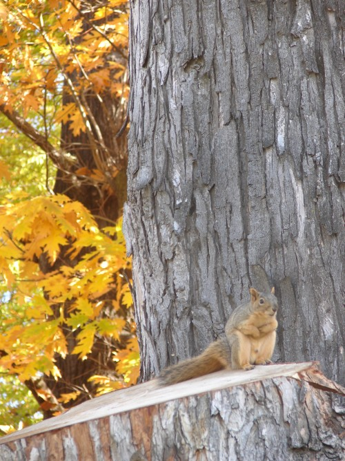 squirrel preparing
