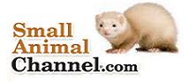 Small Animal Channel.com Ferrets USA Photo Contest 2012