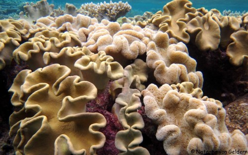 World Travel Dreams: The Great Barrier Reef