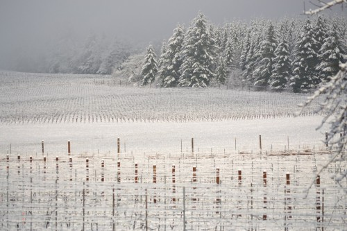 When Living the American Dream Heeds The Call of the Wild - Williamette Vineyards snow