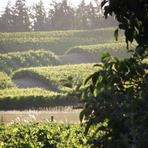 Live Your Dreams: Our Willamette Valley Oregon Vineyards