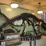 Inside New York museum