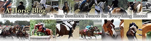 Top 8 Equestrian Blogs and Horse Websites on the Internet: A Horse Blog