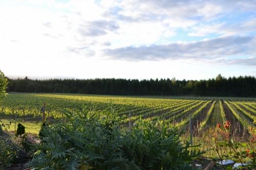 Celebrating Dream Successes: Award Winning Willamette Valley Vineyards