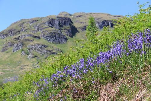 Bluebells by Loch Katrine, The Trossachs, Scotland