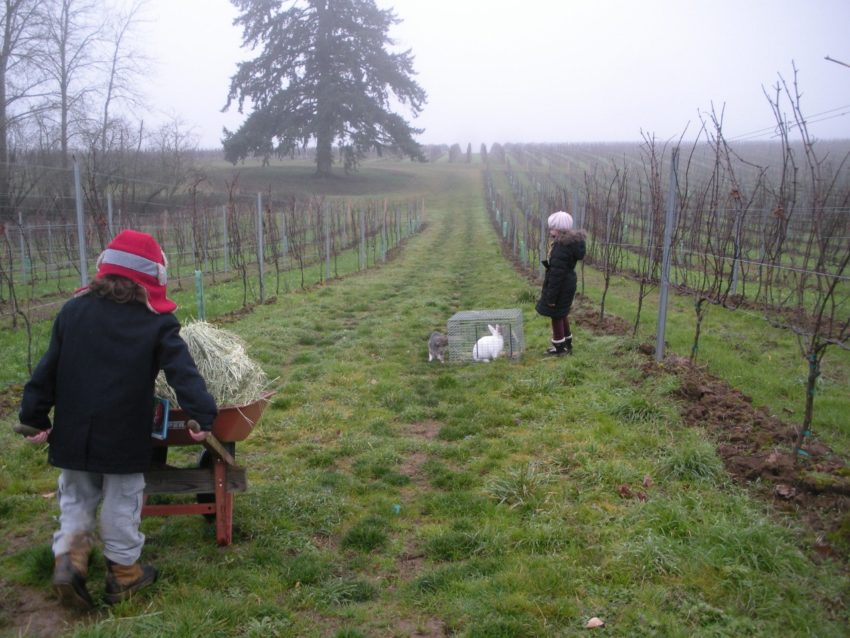 Down the vineyard path living the American Dream