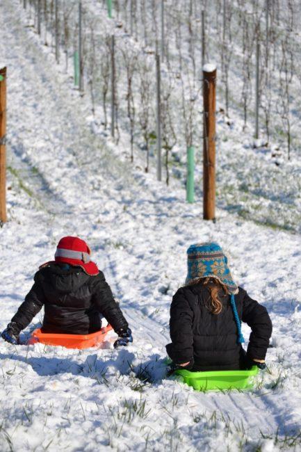 Living the American Dream: Vineyard sledding on March 1st, 2012