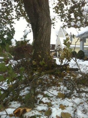 What Surviving a Blizzard Taught Me About Love - Downed tree