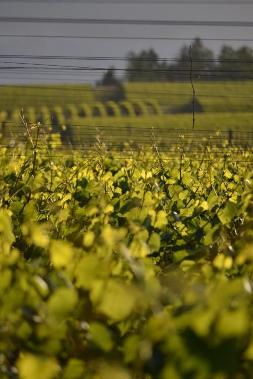 Celebrating Dream Successes Gold Medal Willamette Vineyards