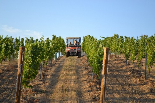 The Call of the Wild: Rushing through the vines on the ATV
