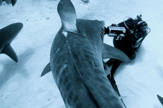 Shark Girl Madison Stewart Shows the World How Dreaming Gets Done Right: Shark Girl Madison Stewart filming under shark
