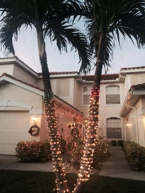 Finding Happiness in a Tropical Christmas: Christmas Palm trees