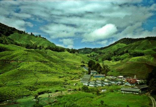 Tea village in the Cameron Highlands, Malaysia