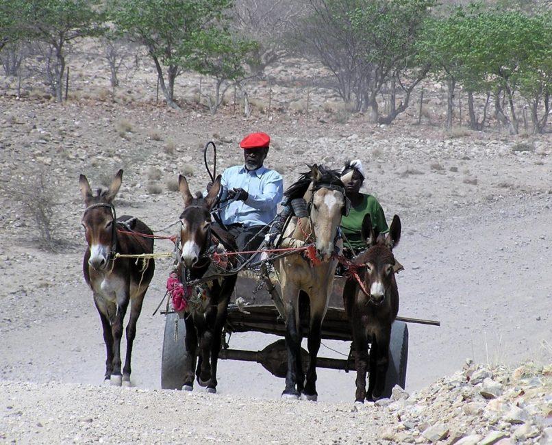 Best Travel Photos from the World Wandering Kiwi: Donkey cart in Damaraland Namibia