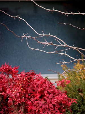 Wordless Wednesday Images of Winter in Northern California:Winter Red Photo by Remy Gervais