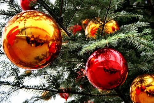 Enjoy Evergreen Travel Dreams During Winter Solstice