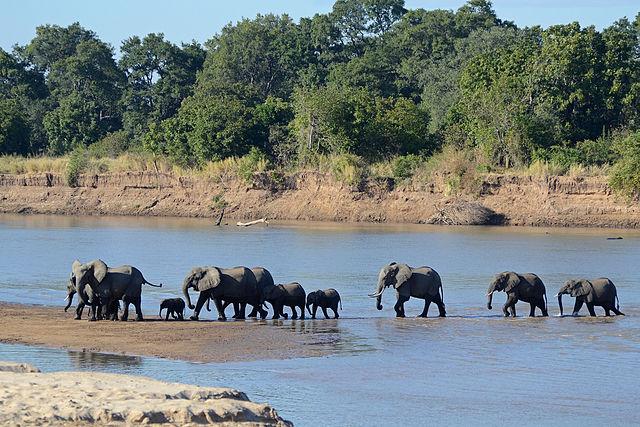 8 Top Travel Gratitude Retreats: South Luangwa National Park, Zambia