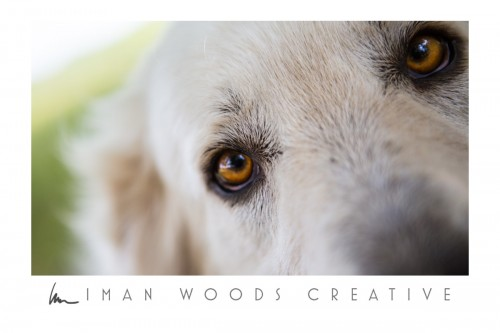 How to Heal with Photography: Losing dogs that we love