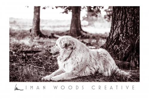 How to Heal with Photography - Losing a farm dog