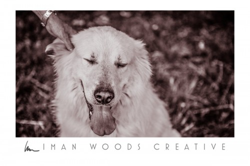 How to Heal with Photography: Images of dogs loved and lost