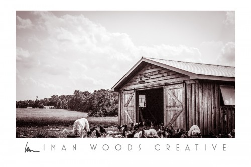 How to Heal with Photography: Images of animal life on the farm