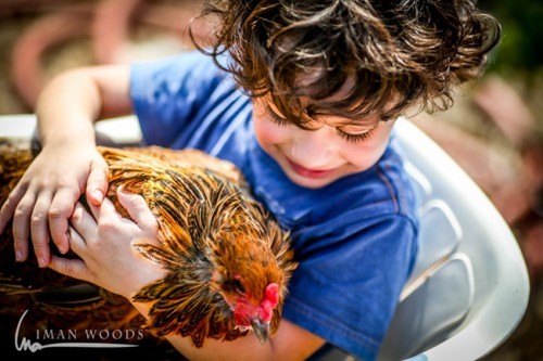 Every child should hug a chicken, says the farmers of this organic egg farm.
