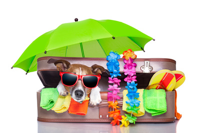 8 Must-Have Travel Items for the World Travel Dreamer - Summer Holiday Dog Buy at Art.com