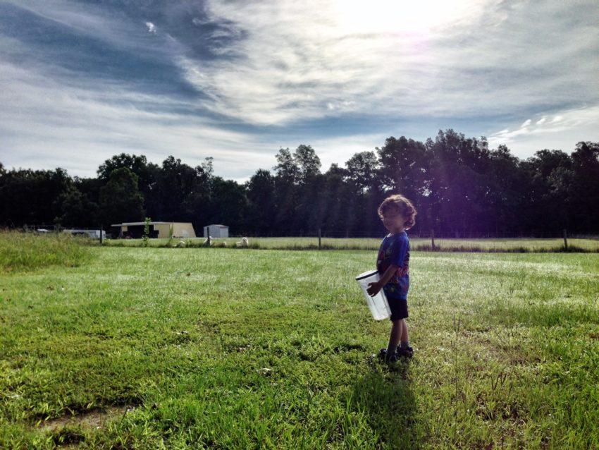 iPhone Photos of Life on the Farm