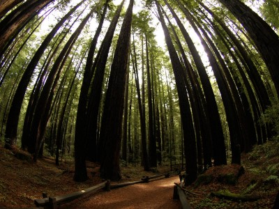 Armstrong Grove Redwoods in Northern California