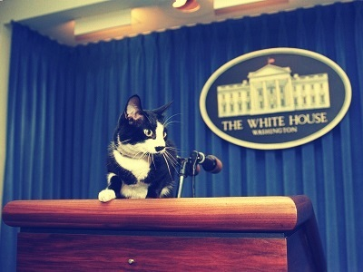 Improve Your Presentations Now - Socks the Presidential Cat