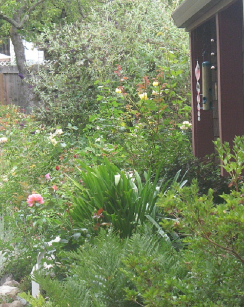Here's a Way Dreaming Online Takes You to South Africa and Beyond: My garden in front of my home